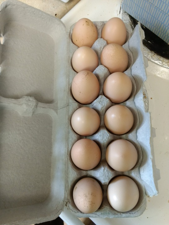 The first dozen